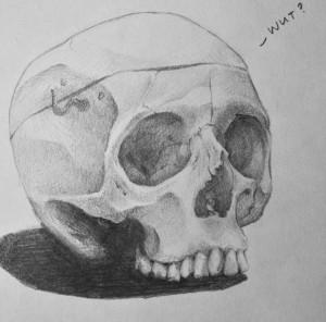 Practice sketch- skull